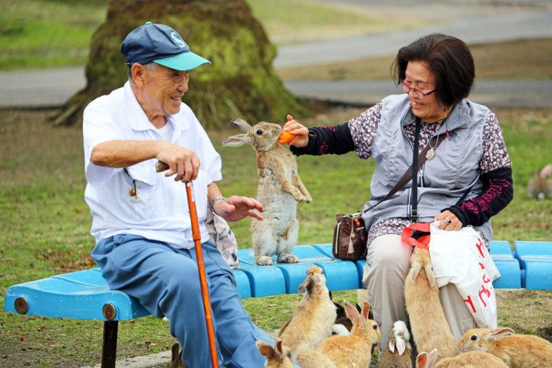 okunoshima island rabbit