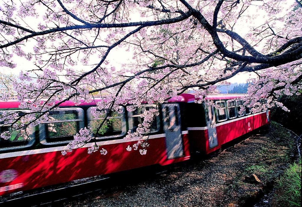 Photo of 阿里山交通攻略 从嘉义市区如何前往搭乘小火车看日出云海,再赏樱花!