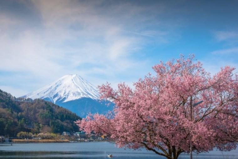 Photo of 【日本】与樱花的约定・东京赏樱必去8大景点