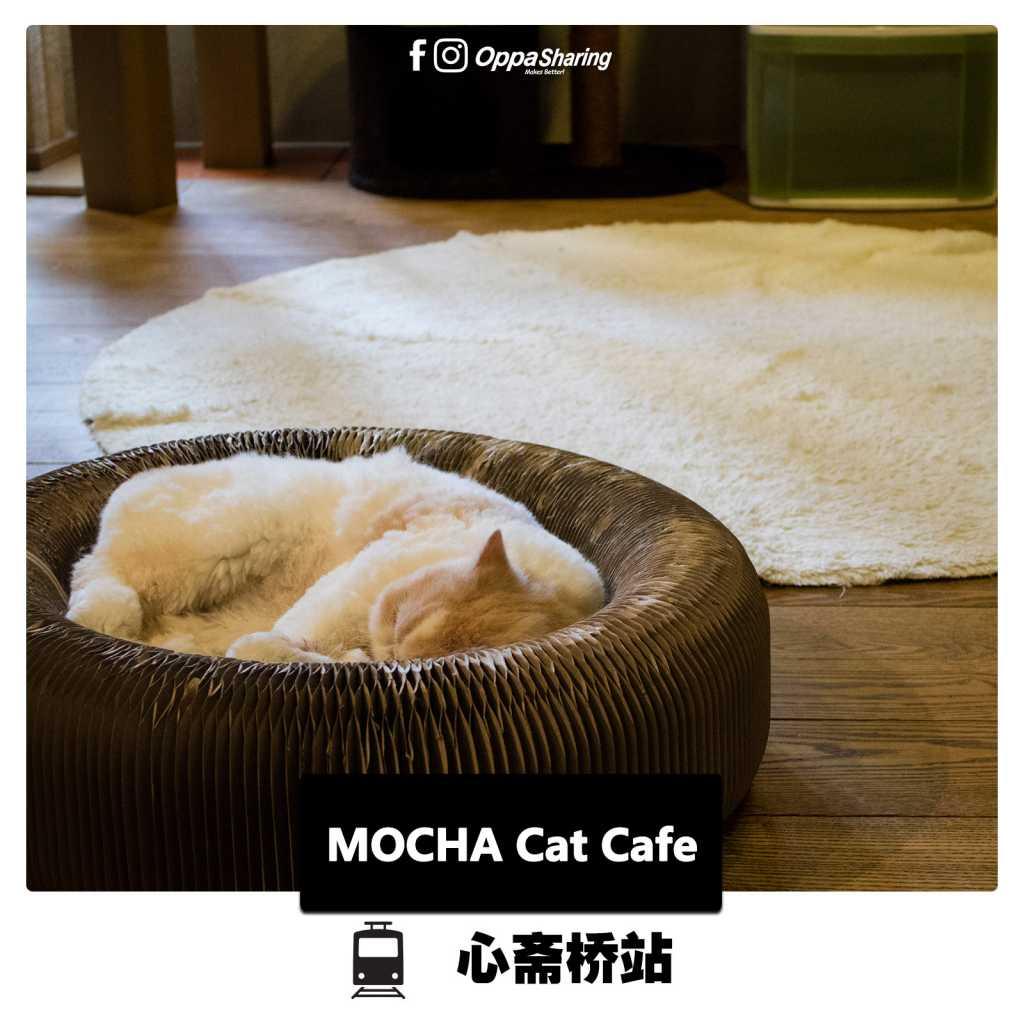 MOCHA Cat Cafe