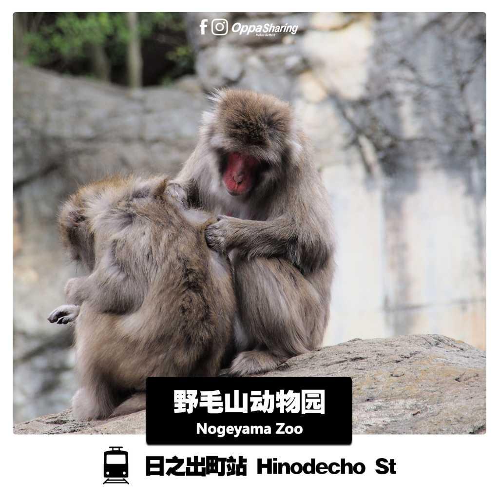 Nogeyama Zoo野毛山动物园