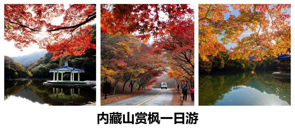 【秋季限定】内藏山赏枫一日游
