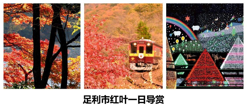 【足利市红叶一日导赏】
