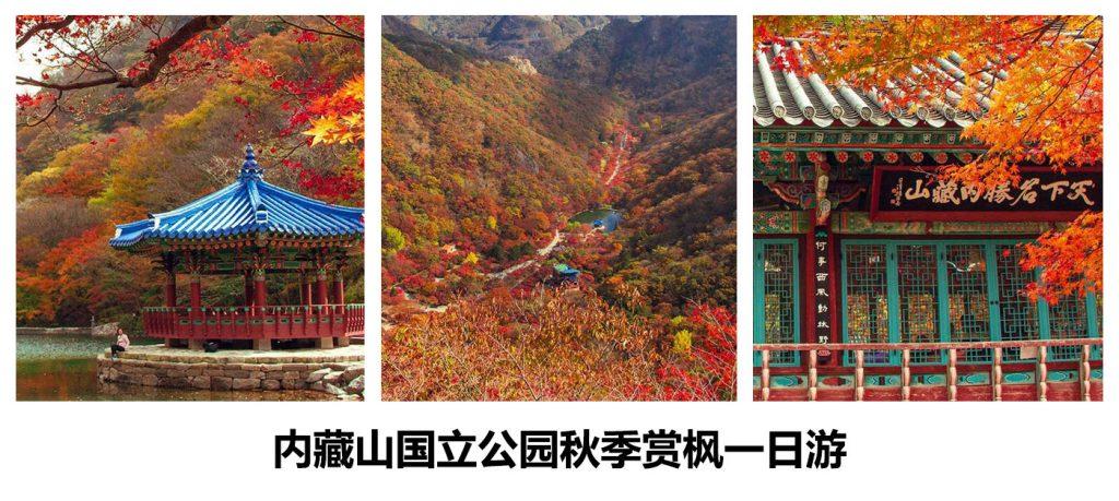 【内藏山国立公园秋季赏枫一日游】