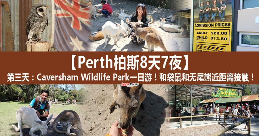 Photo of 【Perth柏斯8天7夜】第三天:Caversham Wildlife Park一日游!和袋鼠和无尾熊近距离接触!